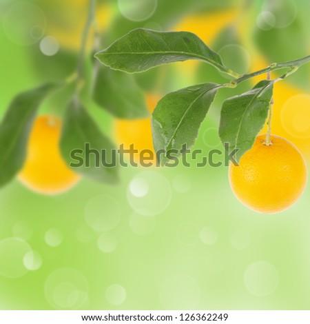Orange tree with bokeh background - stock photo