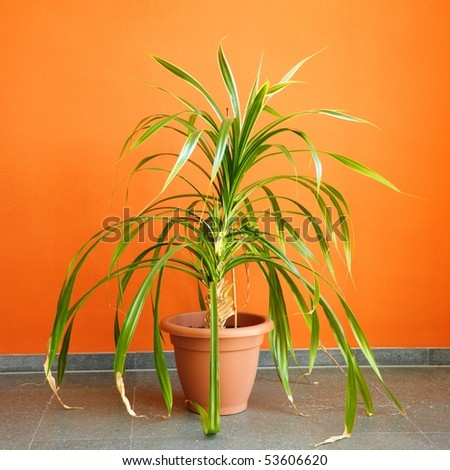 orange wall and pottet plant with copyspace showing real estate concept - stock photo