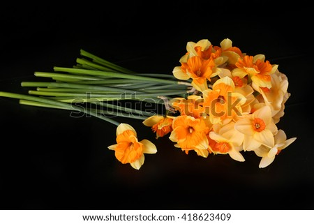 Orange yellow narcissus isolated on black - stock photo