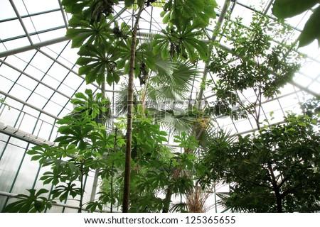 Orangery with tropical plants in Czech Republic, Liberec. - stock photo
