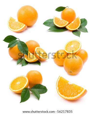 oranges collection - stock photo