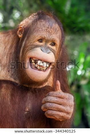 Smiling baby orangutan - photo#25