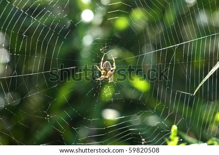Orb Weaver Spider - Neoscona arabesca - stock photo