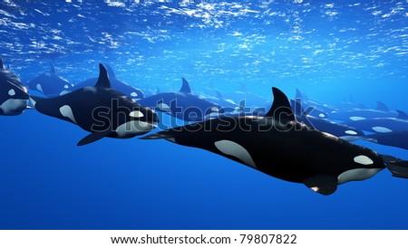 orca - stock photo
