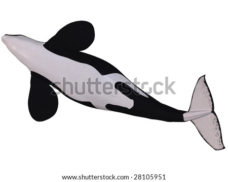 Orca - Killer Whale - stock photo