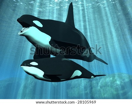 Orca - Killer Whale with Calf - stock photo