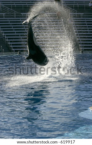 Orca whlae flipping - stock photo
