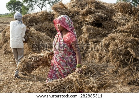 ORCHA,INDIA -  APRIL  23, 2015: Unidentified Indian people working on the field on April  23, 2015 in Orchha, Madhya Pradesh, India. India ranks second worldwide in farm output. - stock photo