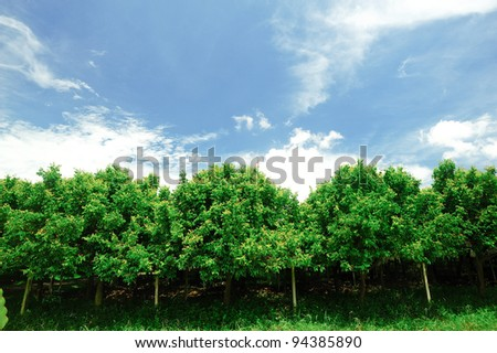 Orchard green. - stock photo