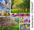 Orchard in spring collage - stock photo