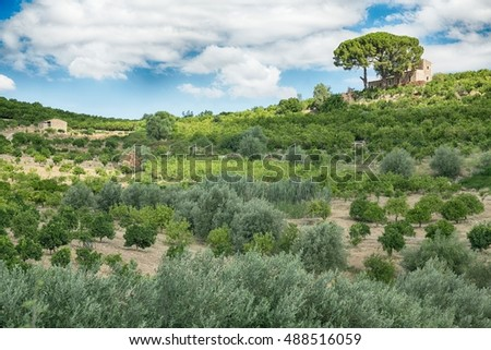 Orchard (lime, lemon, orange) on the island of Sicily, Italy