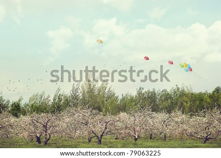 Orchard of apple blossoming trees with soft sunny sky - stock photo