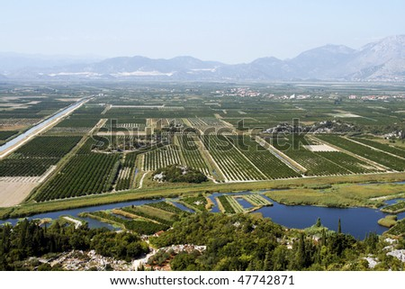 Orchards in southern Croatia