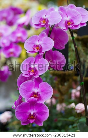 Orchid. - stock photo