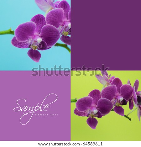 Orchid - stock photo