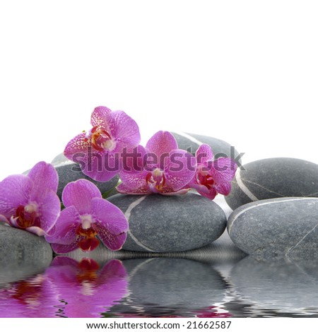 Orchid and pebbles with inverted reflection on white background - stock photo