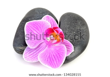 Orchid and stone - stock photo
