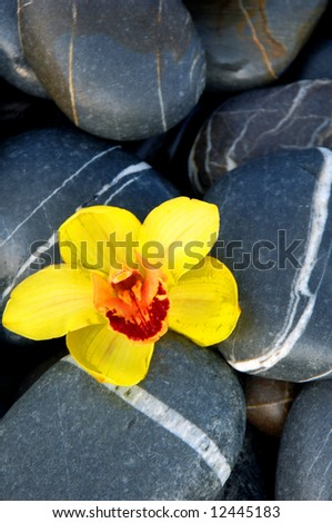 orchid and stone on beach