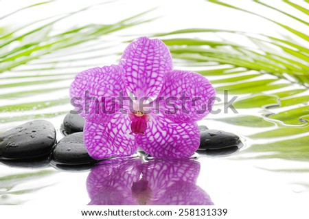 Orchid and wet black stones with bamboo leaf - stock photo