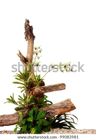 Orchid arrangement isolated on white background