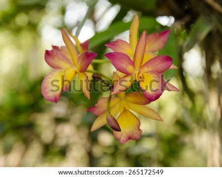 Orchid blooming on garden in thailand. - stock photo