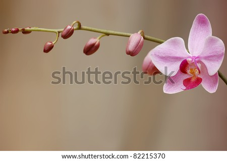 Orchid blossom - stock photo