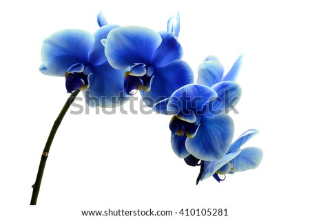 Orchid blue beautiful flower isolated on white background