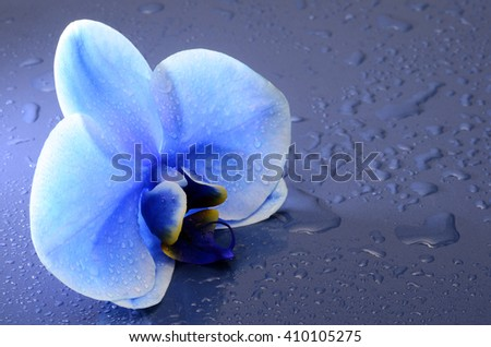 Orchid blue beautiful flower under water droplets for background - stock photo