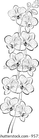 Orchid branch isolated on white background. illustration - stock photo