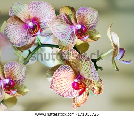 Orchid brench - stock photo