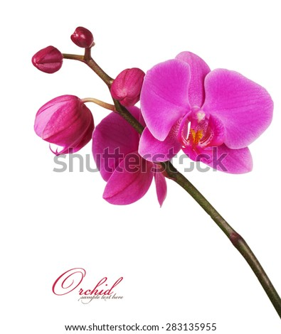 Orchid close-up - stock photo