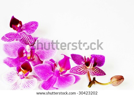 orchid  flower background, - stock photo