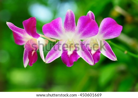 Orchid flower bloom and blurred green natural background. vintage  - stock photo