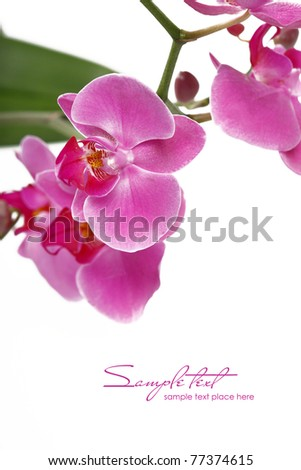 Orchid Flower border - stock photo