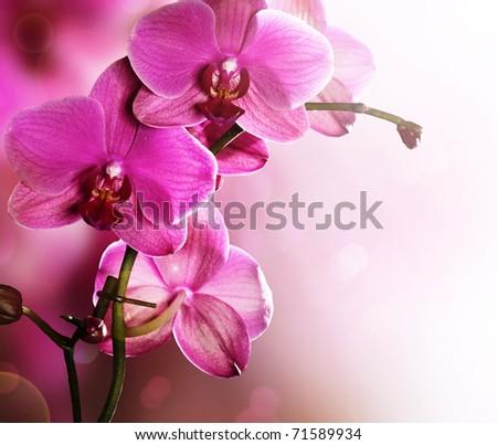 Orchid Flower border design - stock photo