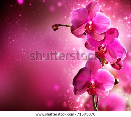 Orchid Flower border design - stock photo