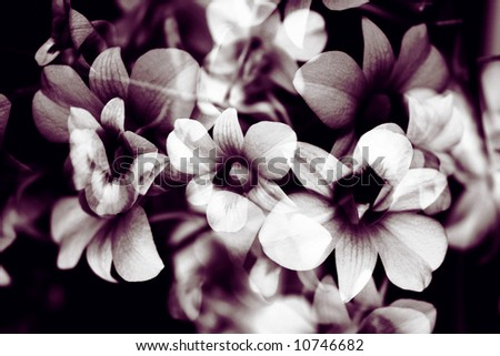 Orchid Flower Composition, tinted, against black background. - stock photo