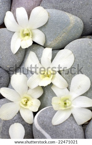 Orchid flower detail still-life spa stone