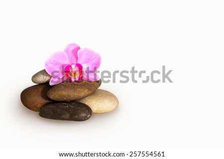 orchid flower in stones isolation on white - stock photo
