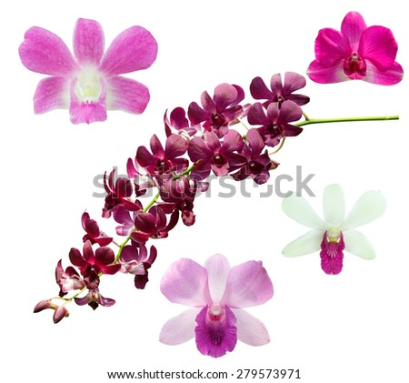 Orchid flower isolated on white background, with Clipping Path. - stock photo