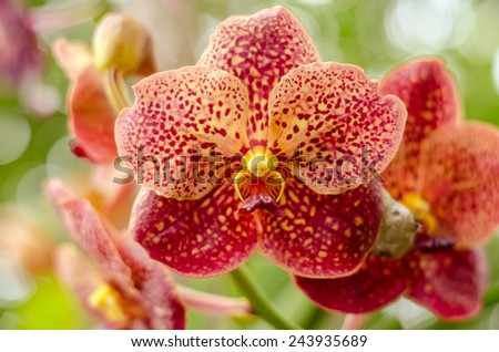 Orchid Flower, Phalaenopsis purple white Stripe x hybrid Orchid flower bloom with soft focus and blur background - stock photo