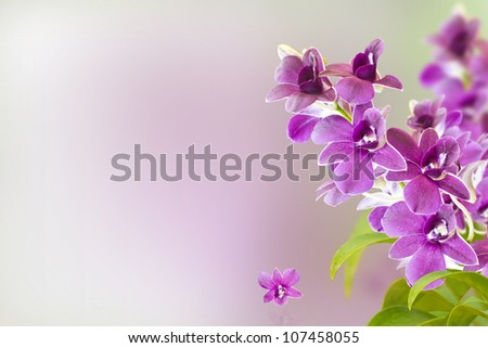Orchid Flower   shallow DOF with Background - stock photo