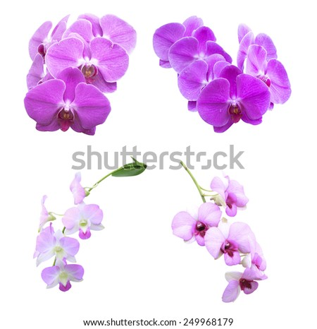 orchid flowers - stock photo