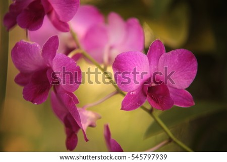 orchid flowers, close up