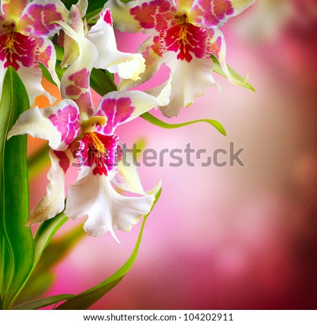 Orchid Flowers Design - stock photo