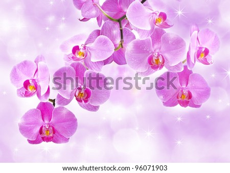 Orchid flowers, greetings card - stock photo