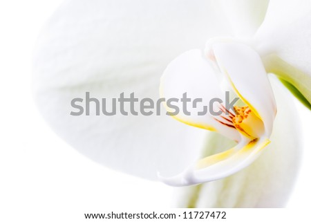 Orchid flowers isolated on white. - stock photo