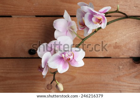 Orchid flowers on wooden background - stock photo