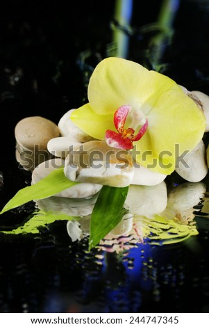 Orchid flowers with water drops and pebble stones on dark colorful background - stock photo