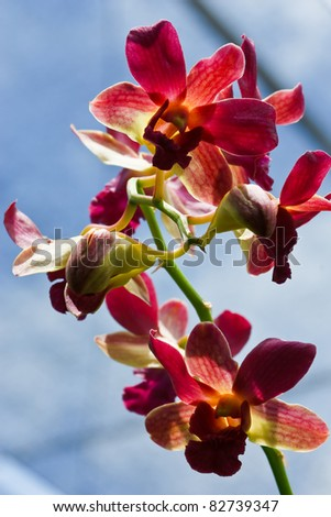 orchid in farm thailand